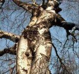 sex-weird_trees01.jpg