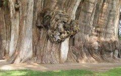 sex-weird_trees02.jpg