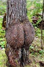 sex-weird_trees04.jpg